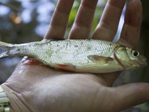 Kleine Fische locken größere an den Futterplatz