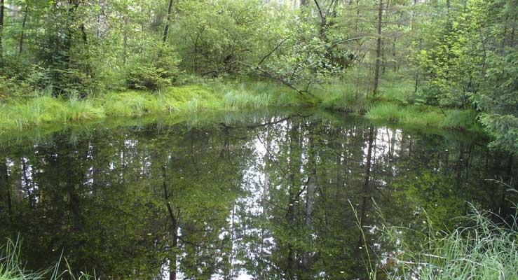 Erfolgreich am Teich: Angelplatz, Zielfische, Montage