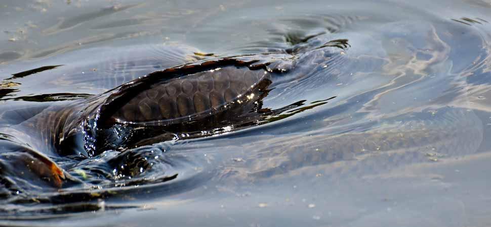 Karpfenangeln: Diese Gewässerböden bringen den Erfolg
