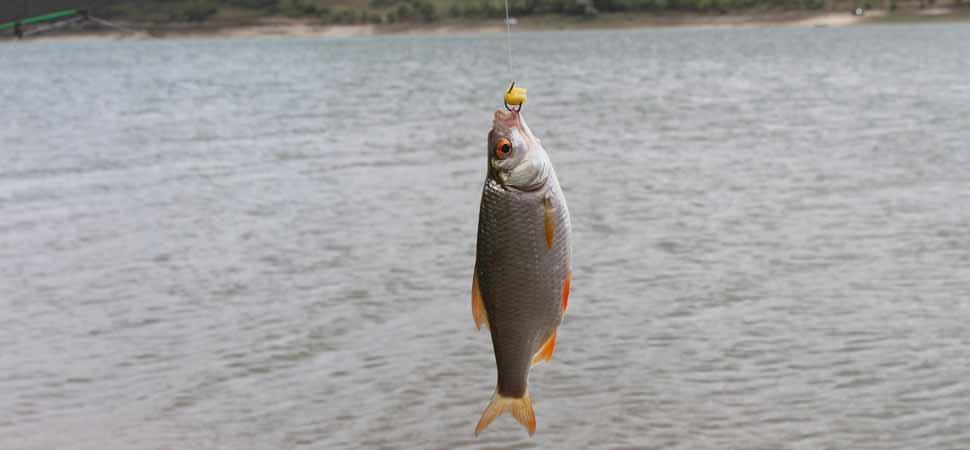 Köderfisch optimal anbieten und besser fangen