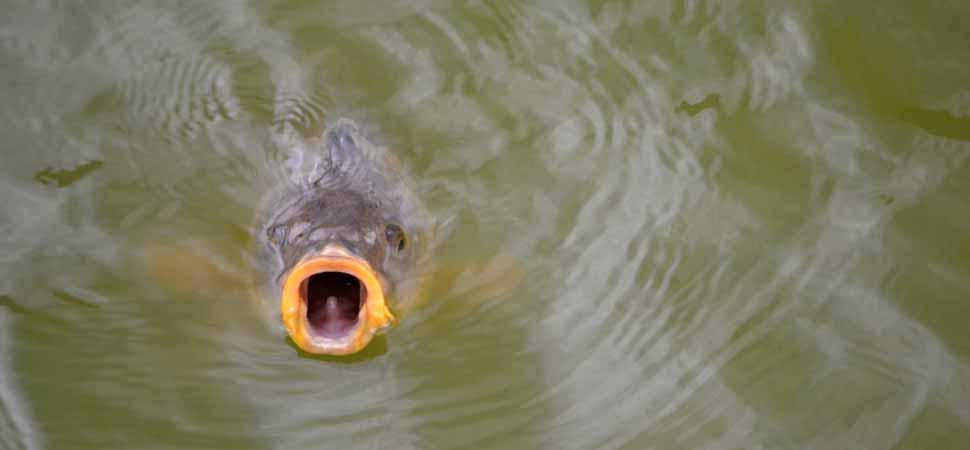Ist es sinnvoll im Winter auf Karpfen zu angeln?