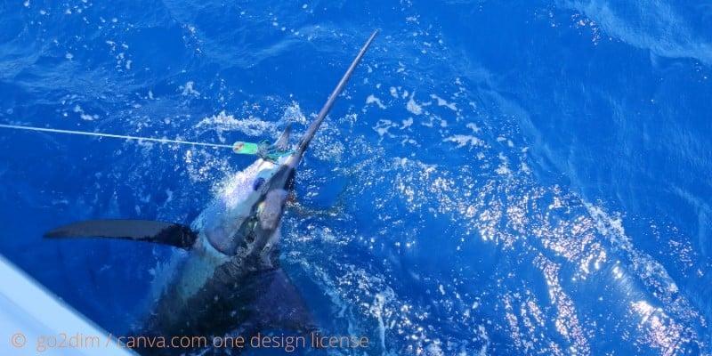 Big Game Fishing: Hochseeangeln auf wirklich große Fische