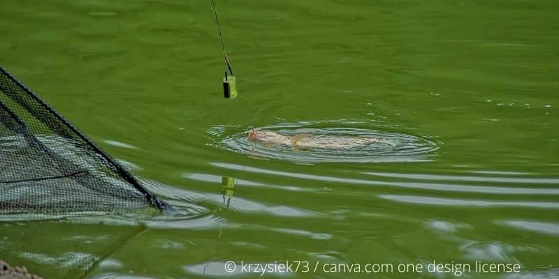 5 Tipps: So drillst du einen Fisch beim Angeln